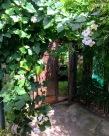 Back Wooden Door